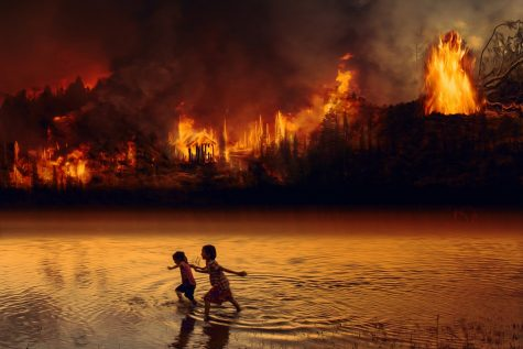 Amazon Rainforest Fires Continue to Grow